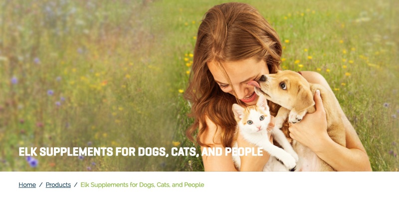 good pet website photography dog and cat